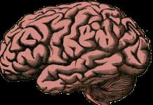 hersenen_dementie